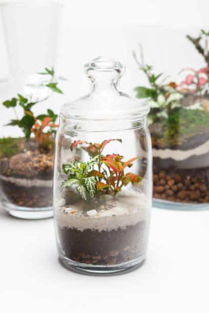 flasche gärten (terrarien) in ein anderes glasvasen - terrarienpflanzen stock-fotos und bilder