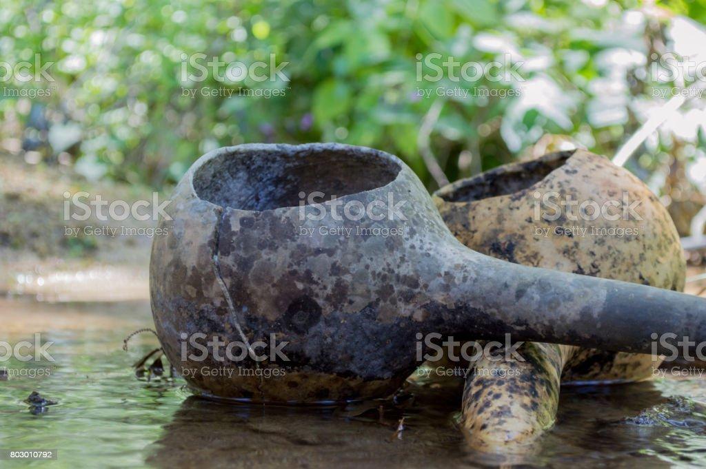 Bottle Gourd stock photo