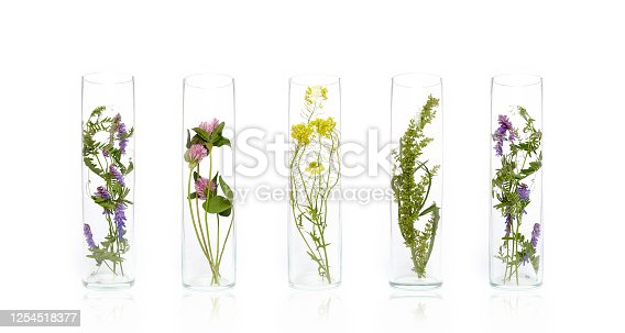 Bottle Natural cosmetics organic product from plants and flowers, herbal tube cosmetics for skin care. Nature beauty science medicine laboratory test