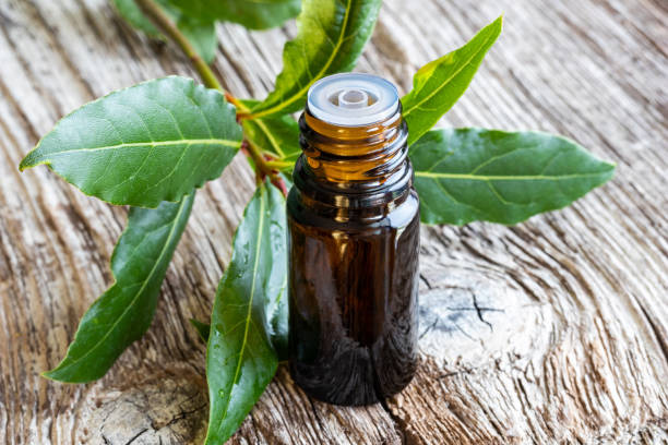 A bottle of bay leaf essential oil with fresh bay leaves stock photo