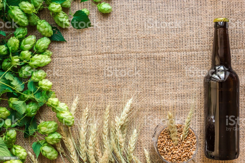 Bottle of beer with Brewing ingredients. Hop flower with wheat. Top view stock photo