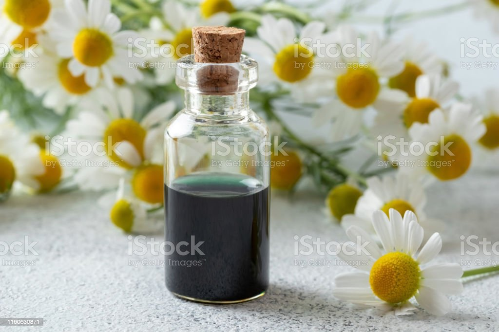 A Bottle Of Dark Blue German Chamomile Essential Oil And Fresh Chamomile Flowers Stock Photo Download Image Now Istock
