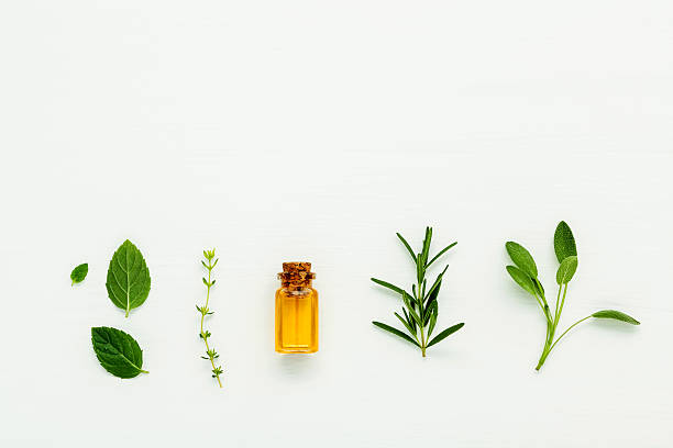 Bottle of essential oil with  fresh herbal sage, rosemary, thyme – Foto