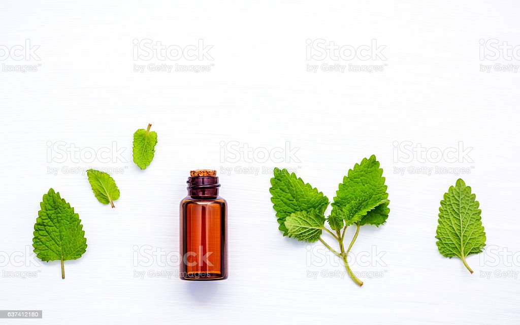 Bottle of essential oil with fresh lemon balm leaves setup - foto stock