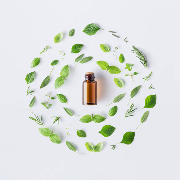 Bottle of essential oil with round shape of fresh herbs and spices basil, sage, rosemary, oregano, thyme, lemon balm  and peppermint setup with flat lay on white background stock photo