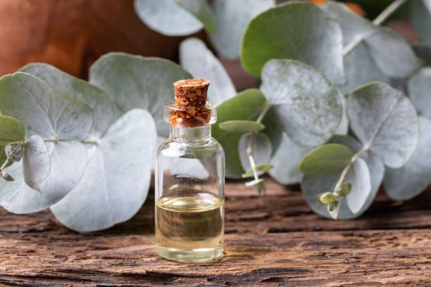 en flaska av eukalyptus eterisk olja med eukalyptus blad - eucalyptus bildbanksfoton och bilder