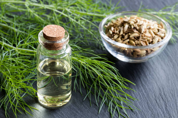 A bottle of fennel essential oil A bottle of fennel essential oil with fresh fennel tops and fennel seeds in the background fennel stock pictures, royalty-free photos & images