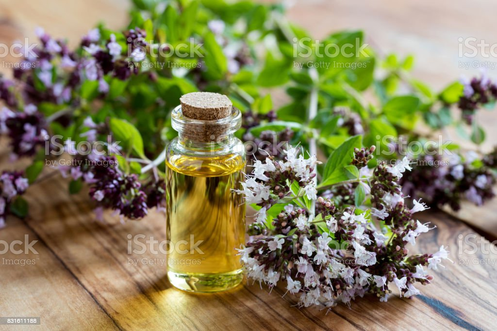 A bottle of oregano essential oil stock photo