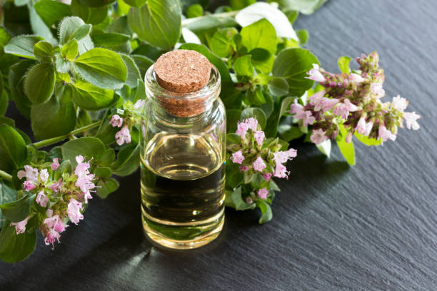 A bottle of oregano essential oil A bottle of oregano essential oil with blooming oregano twigs on dark background oregano stock pictures, royalty-free photos & images
