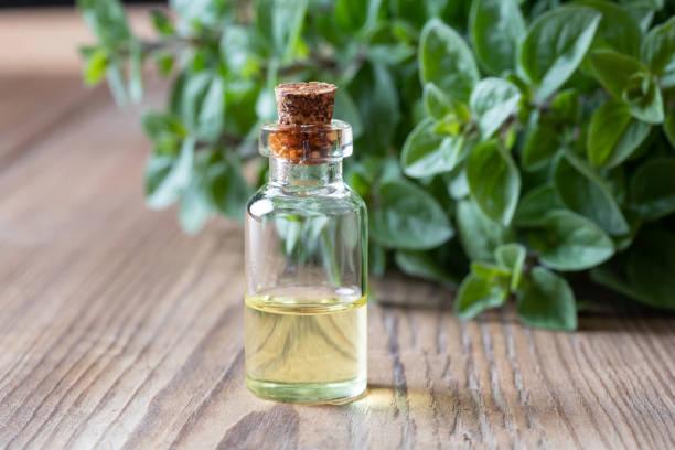 una botella de aceite esencial de orégano con orégano fresco - orégano fotografías e imágenes de stock