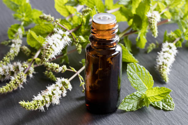 A bottle of peppermint essential oil stock photo