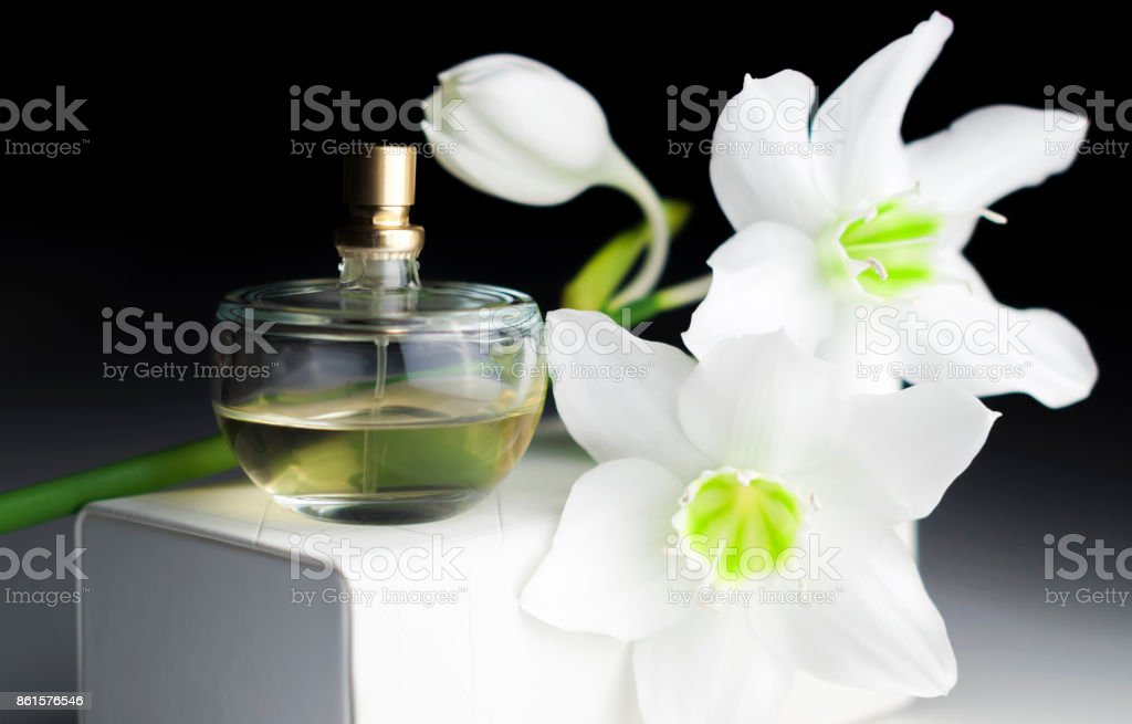 bottle of perfume, white daffodil on a dark background stock photo