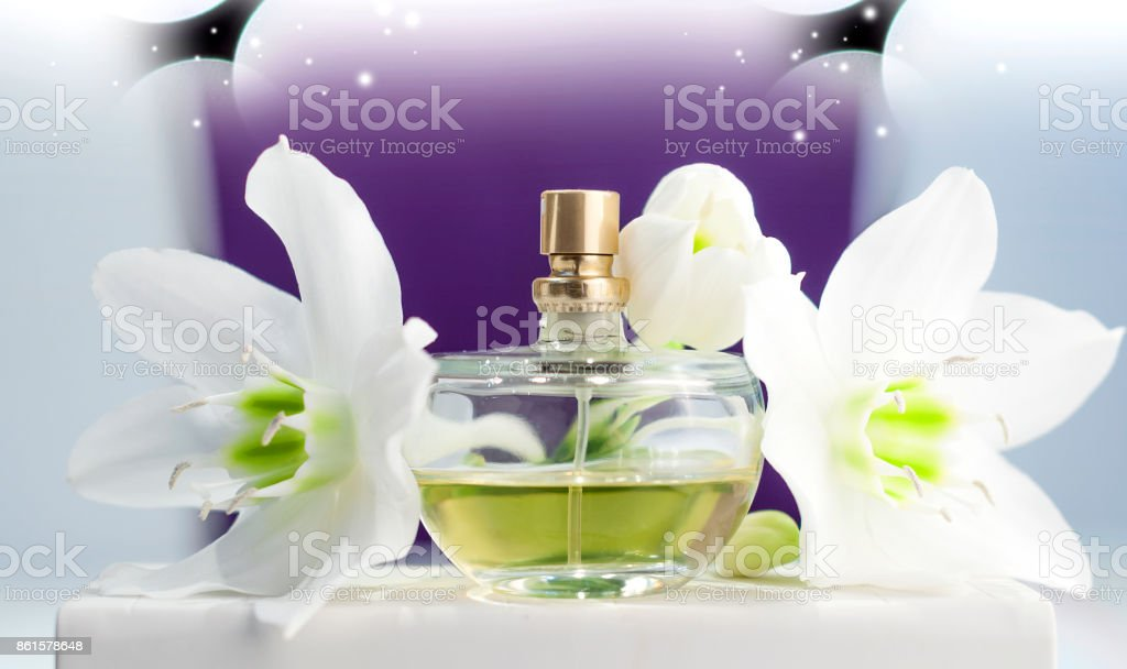 bottle of perfume, white daffodil on purple background stock photo