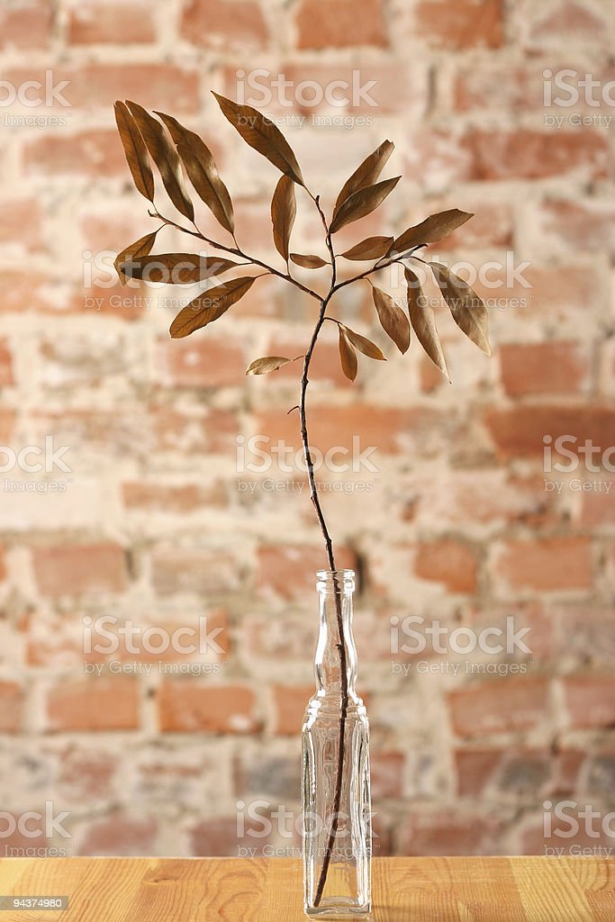 Bottle with dry twig royalty-free stock photo