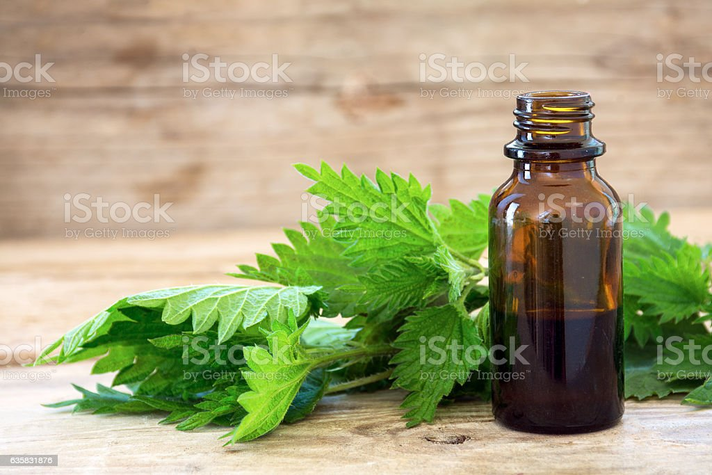 bottle with nettle essence oil and fresh leaves on wood stock photo