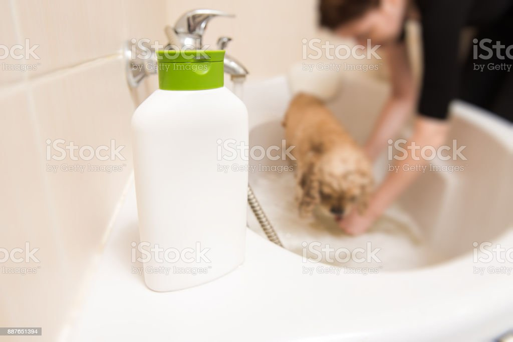 Bottle with shampoo in the bathroom stock photo