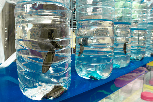 Bottled Leech, Living Organism, Pet Shop,