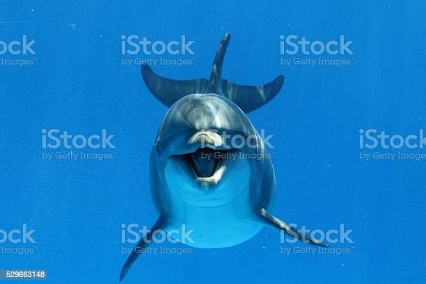 Bottlenose dolphin picture id529663148?b=1&k=6&m=529663148&s=612x612&h=7pkaehcsjr jzawvee40bfkxd6p6lfrhcngjnfuspre=