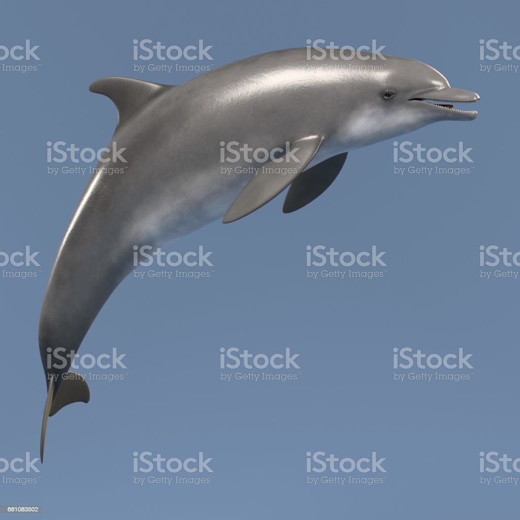 bottlenose dolphin royalty-free stock photo