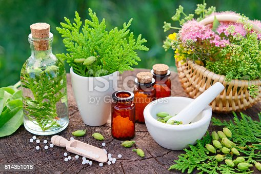 Bottles of homeopathic globules. Thuja, Plantain, healthy infusion, mortar and basket of herbs. Homeopathy medicine.