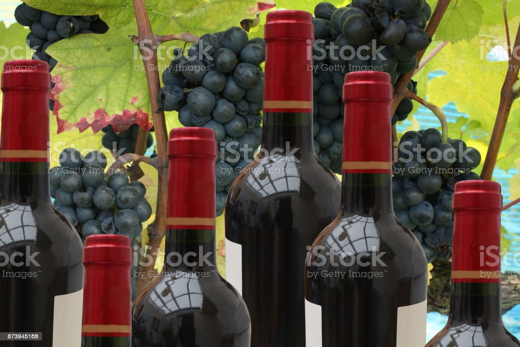 Bottles of red wine Vineyard  Black Grappe stock photo