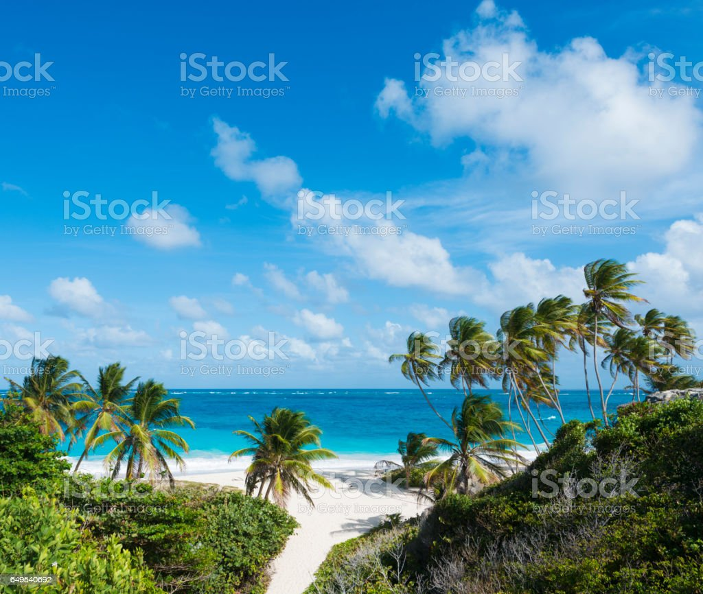 Bottom Bay Beach and Palm Trees in Barbados stock photo