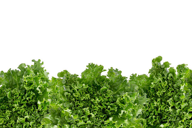 bottom border of crisp fresh lettuce - marul stok fotoğraflar ve resimler