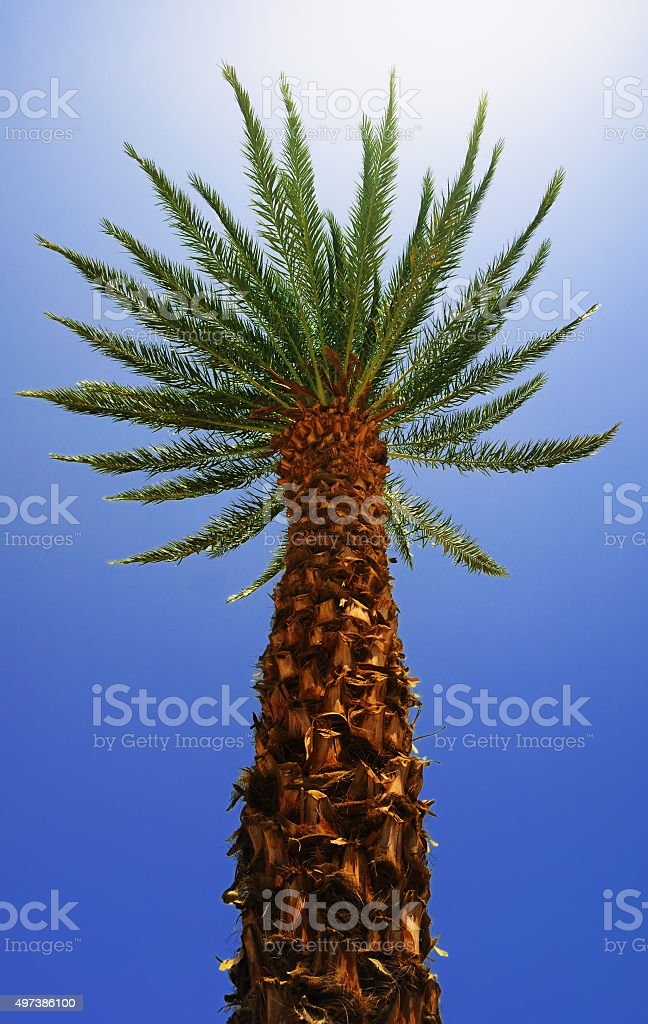 Bottom view of a palm tree stock photo