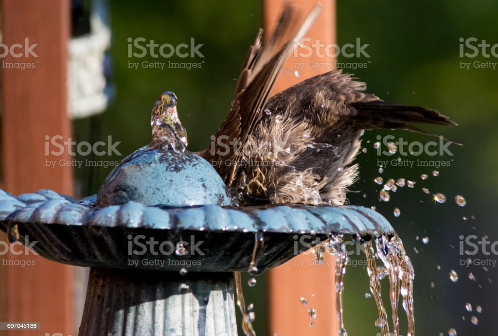Bottoms up. stock photo