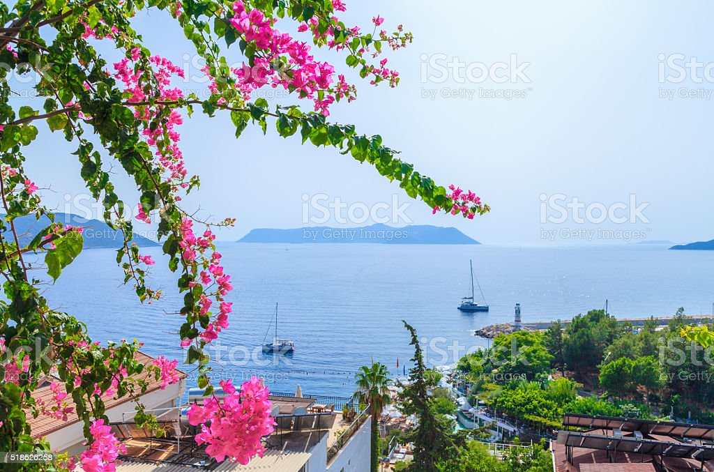 Bougainvillea flowers and nature - Kaş, Turkey stock photo