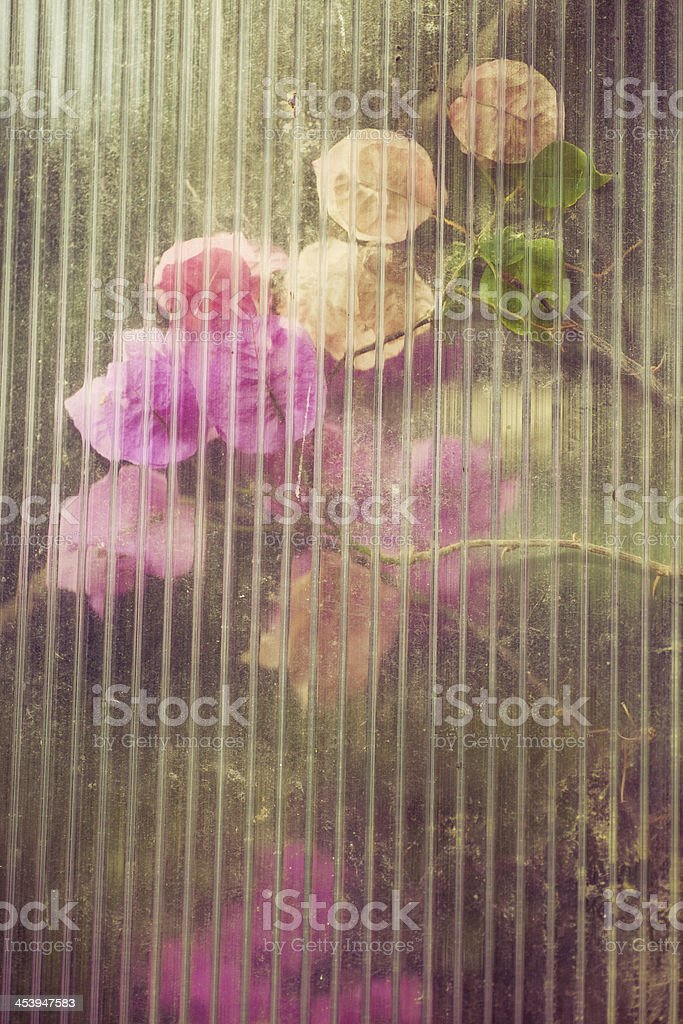 Bougainvillea flowers with antique look royalty-free stock photo