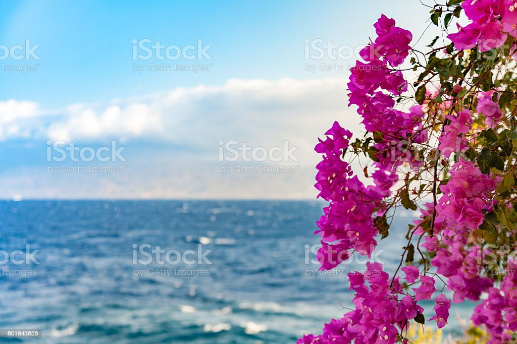 Bougainvillea from Greece stock photo