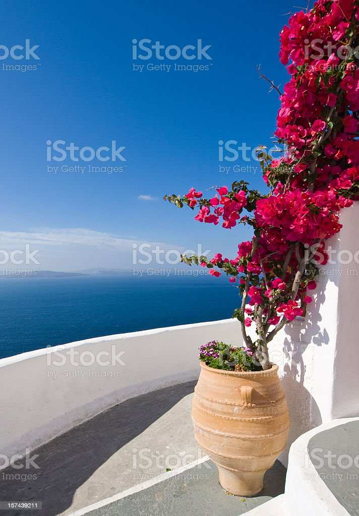 bougainvillea on stairs stock photo