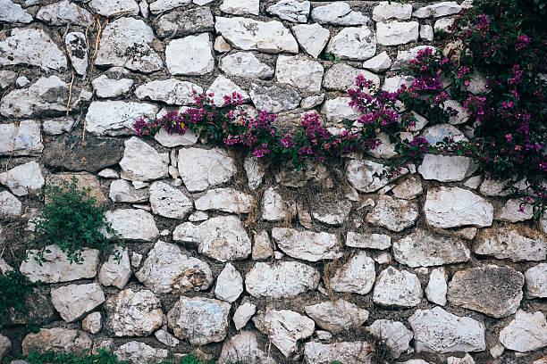 Bougainvillea on stone wall