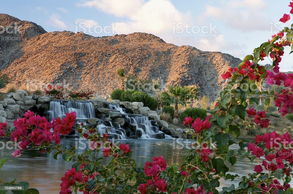 bougainvillea waterfall stock photo