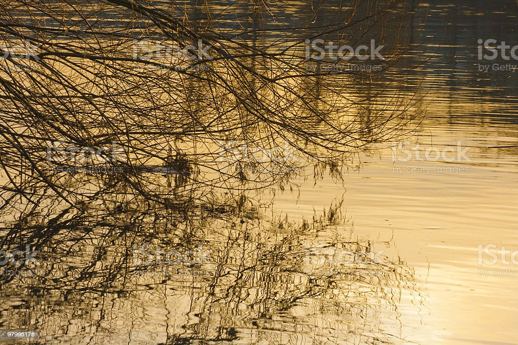 boughs touch the water royalty free stockfoto