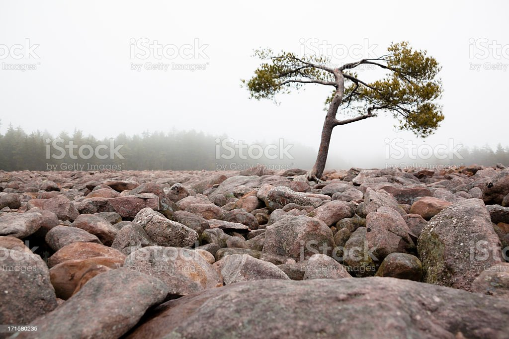 Boulder Field, Hickory Run State Park, Pennsylvania  royalty-free stock photo