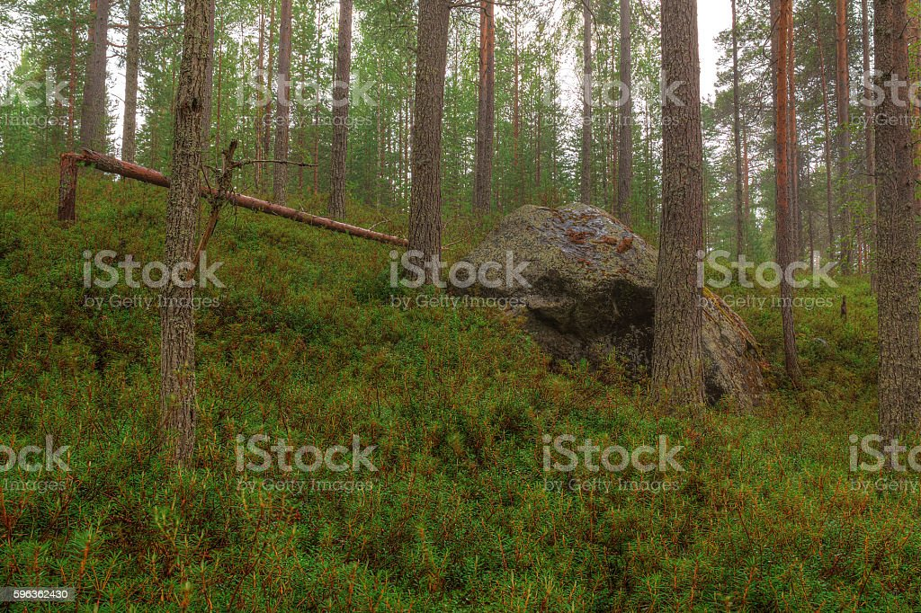 Boulder in forest royalty-free stock photo