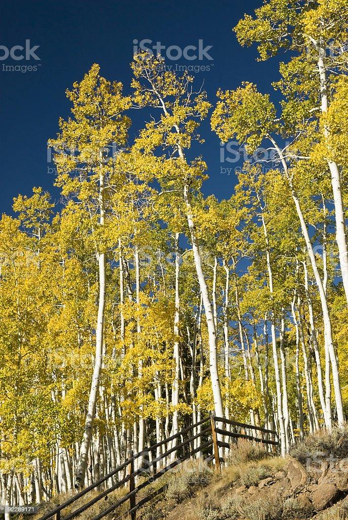 Boulder Mountain  stock photo