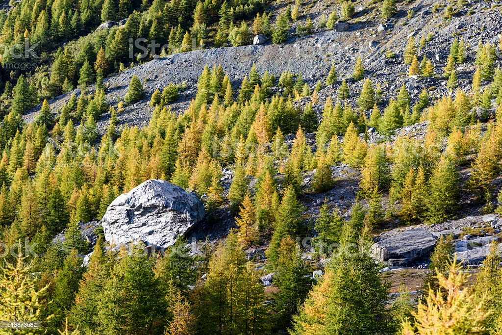 Boulder, Pines, Monte Rosa stock photo