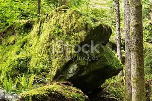 Giant moss covered boulder that resembles a dog head profile view - Trail Still Life on Little Si Mountain near Seattle