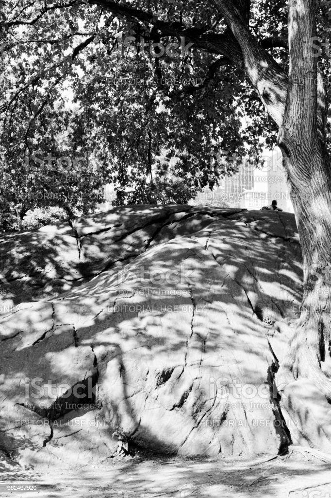 Pedregulhos no Central Park - Foto de stock de Ajardinado royalty-free