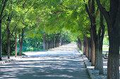 Boulevard in park