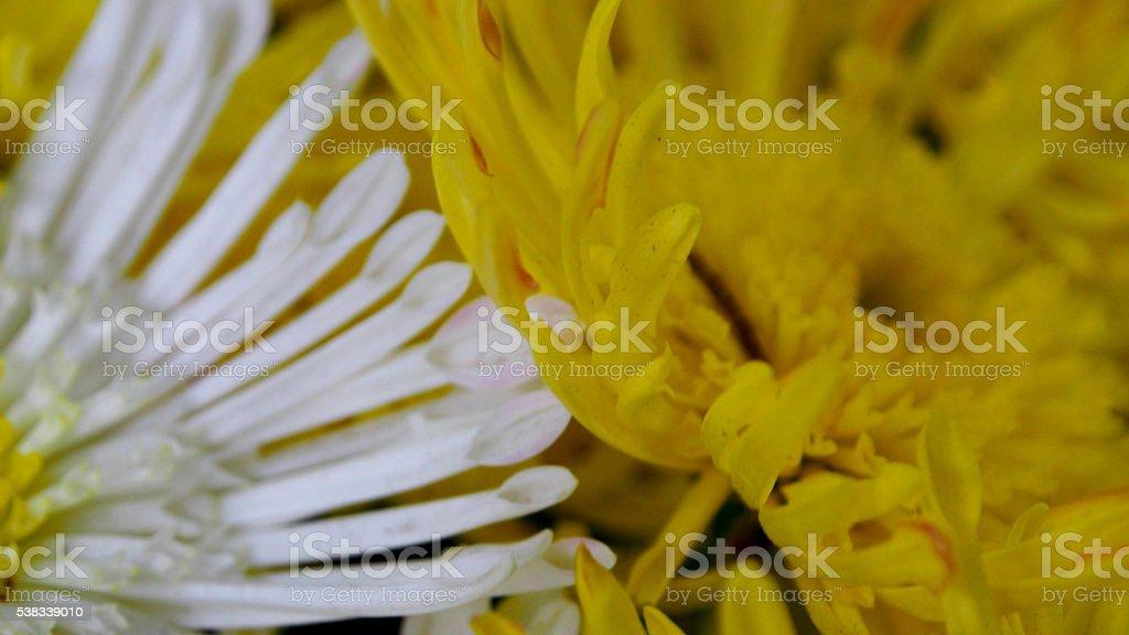 Boundaries of two flowers stock photo