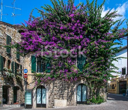 house covered with bougainvillea, Sirmione, Garda Lake, Italy