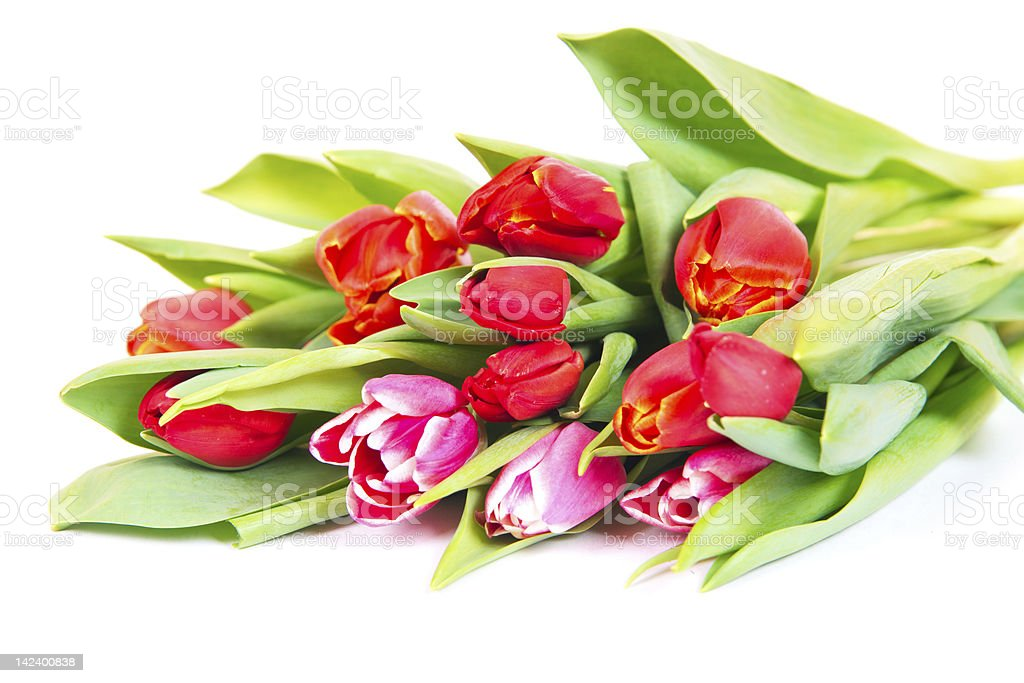 Bouqet of red and pink tulips isolated royalty-free stock photo