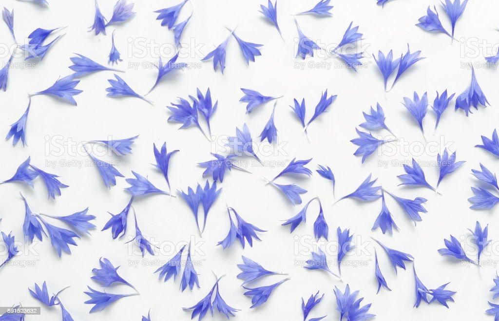 Bue bouquet fleurs bleuets sur fond blanc. - Photo