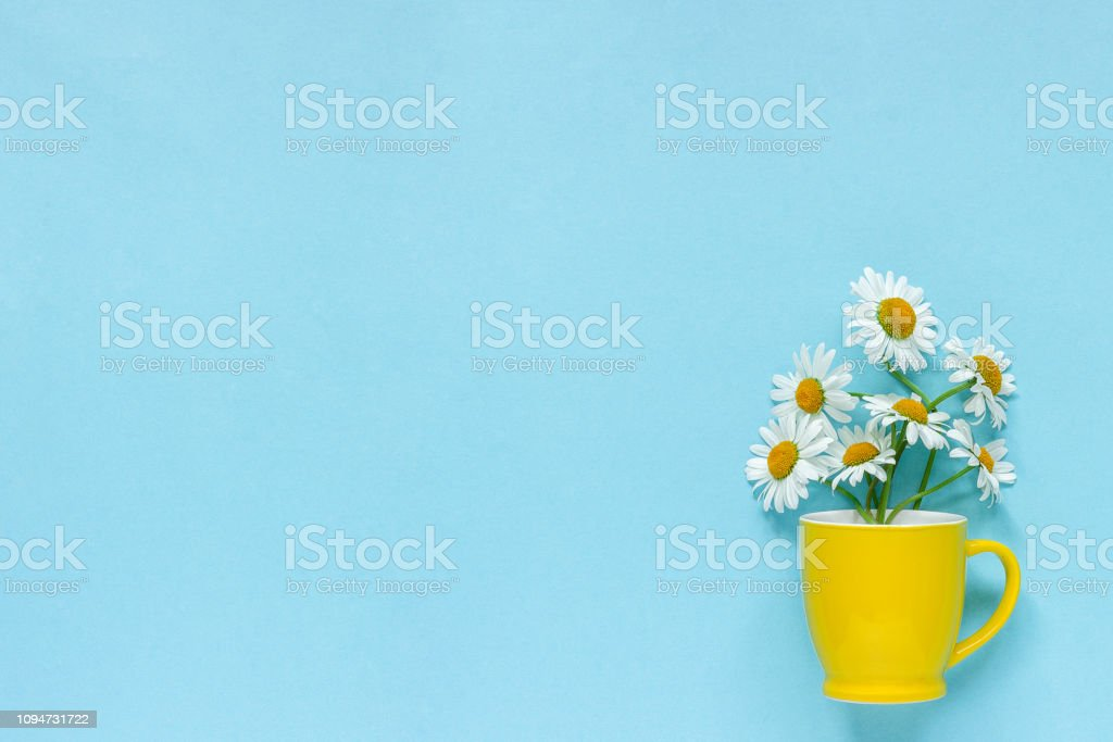 Bouquet chamomile daisies flowers in yellow mug on pastel blue color...
