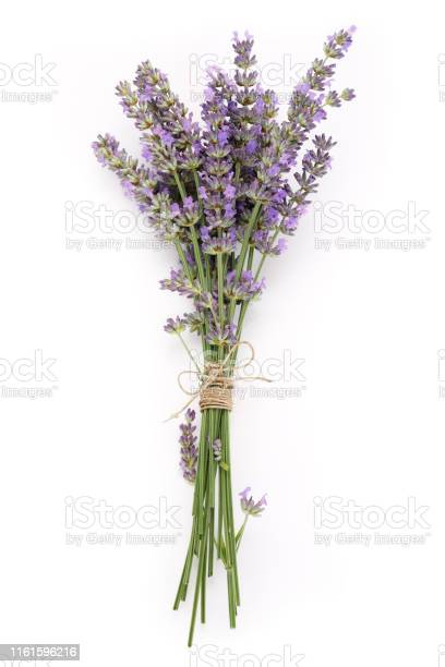 Bouquet lilac lavender flowers isolated on white background picture id1161596216?b=1&k=6&m=1161596216&s=612x612&h=jov9k3mjmf70h8 lffds patmbw6me3ft2yrnxipzg0=