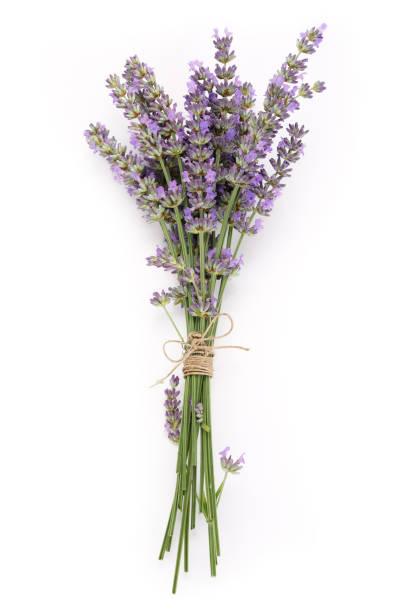 bouquet lila lavendel blumen isoliert auf weißem hintergrund - bund stock-fotos und bilder